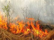 Регулярные пожары помогают лугам
