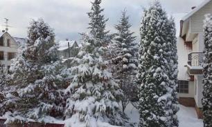 Снегурочка и Дед Мороз обойдутся жителям Хабаровска дорого