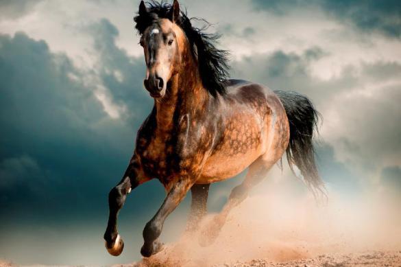 Корм для лошади: мюсли или гранулы?
