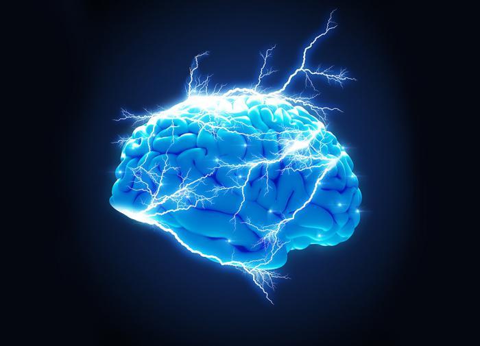 Мозг человека за последние 40 тыс. лет уменьшился в объёме