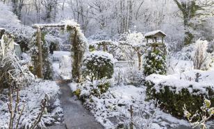 Как сохранить свой сад зимой - советы профессионального садовода