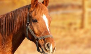 Жители Самары в период ограничений могут покататься на лошадях