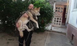 Житель Волгограда завел в квартире волка