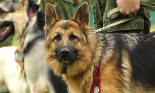 Кинологи предлагают ввести экзамен для тех, кто хочет завести собаку