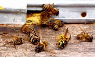 Минсельхоз направил регионам рекомендации по предотвращению гибели пчел