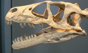 Палеонтологи обнаружили на Аляске останки дромеозаврида