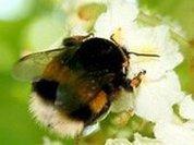 На то и шмель, чтобы пчела не дремала