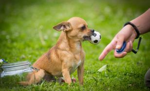 Собаки знают, о чем мы думаем