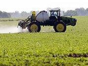 Фермерские хозяйства - это головная боль для чиновников - мнение