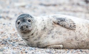 В Антарктиде обнаружены тюлени, которые под водой общаются ультразвуком