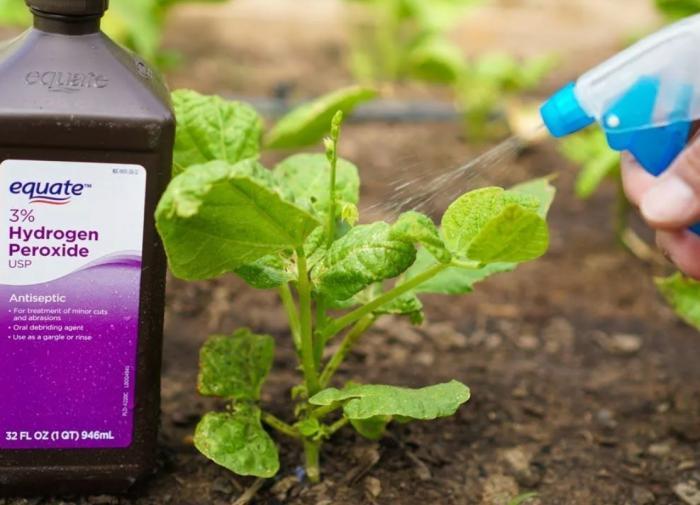 Перекись водорода для комнатных растений