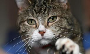 В Англии старый кот вернулся к хозяевам после 7 лет бродяжничества
