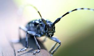 В Южной Корее создали роботизированную копию рогатого жука
