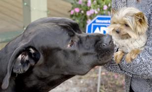 Госдума: закон о маркировке домашних животных сделает их бездомными