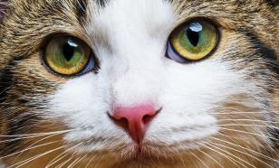 Как кошке удалось приручить человека