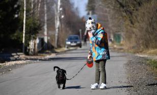 Волонтеры выгуливают собак москвичей, которым нельзя на улицу