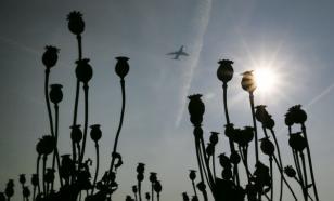 """В Мексике растет производство опиума """"для нужд"""" США"""