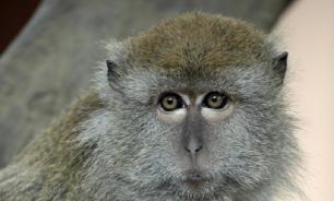 Укушенную обезьяной жительницу Питера могут посадить за лечение
