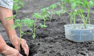 Главная дачница России Октябрина Ганичкина развеивает мифы садоводов