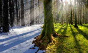 Зелёный курс: тема экологии - не ширма для прикрытия бесчестной игры