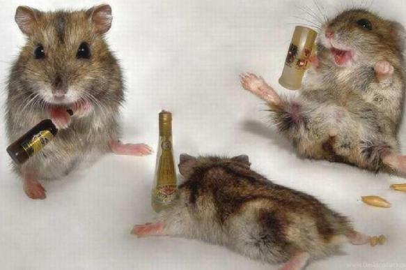 Мышей научили не пить алкоголь при повышении его крепости