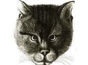 Зовите кота Васькой, а не Серафимом Саровским