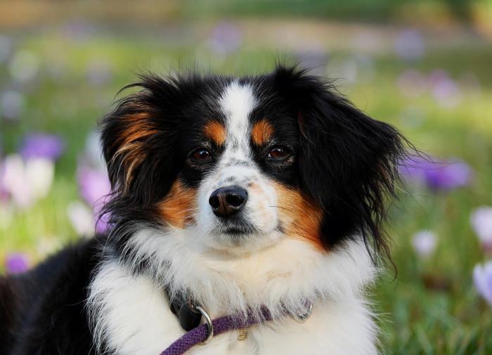 Кинолог рассказал, как сэкономить на содержании собак