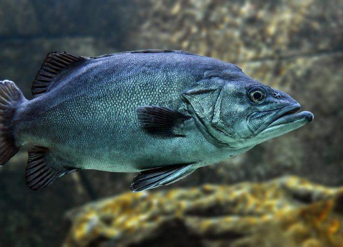 Рыбья чешуя поможет инженерам улучшить аэродинамику самолётов