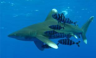 В Мексике найдена древняя акула с крыльями