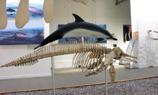 Палеонтологи обнаружили в США останки доисторического дельфина