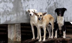 Не пристанище, а концлагерь: В столичном приюте готовят к вывозу 300 собачих трупов
