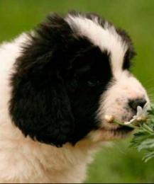 Топ токсичных для животных комнатных растений