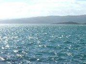 Новая Зеландия и Австралия объединились против китобоев