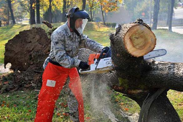 Путин: нужно бороться с криминалом в лесной отрасли