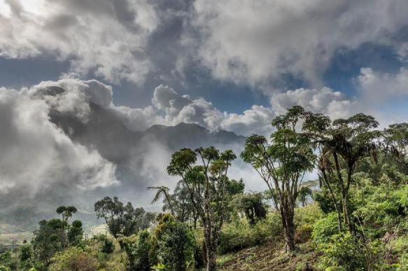 Треть растительности тропической Африки может скоро исчезнуть