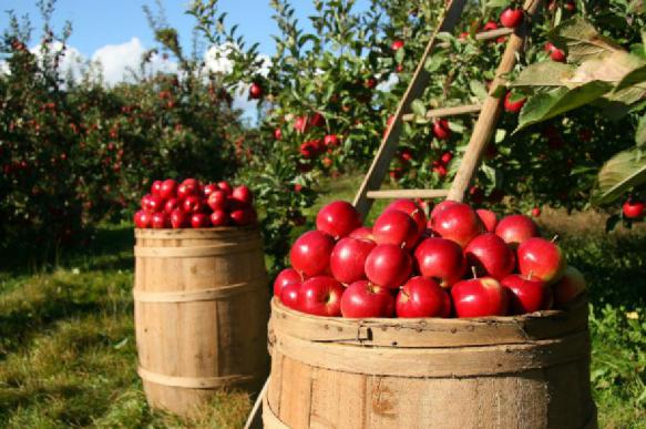 Воск, которым покрывают яблоки, может повредить кишечник