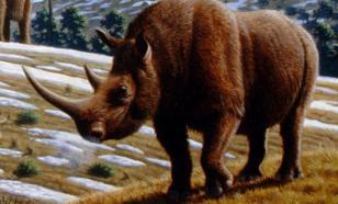 В Якутии обнаружили уникального носорога ледникового периода