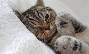Хозяева запрещали кошке лежать на кровати и были осуждены