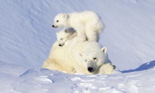 Географ Юрий Мазуров: Арктика — это сверхпривлекательное пространство