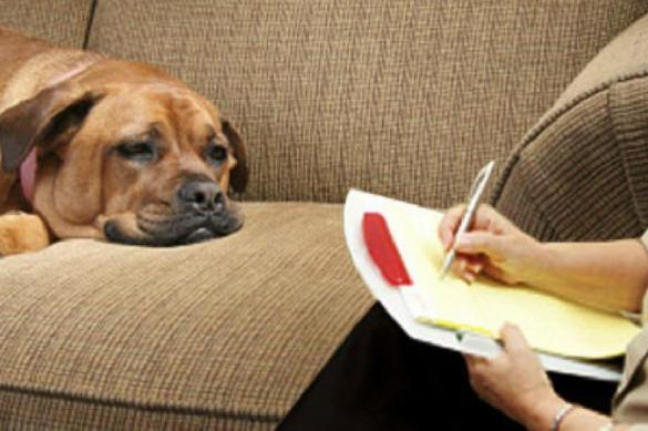 Проблемы психики собак — родом из щенячества