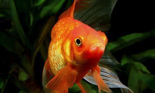 Как создать великолепные условия в аквариуме