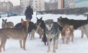Тюменцы заявили о грядущей расправе над бездомными собаками