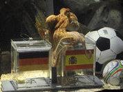 Урну с прахом осьминога Пауля выставят напоказ