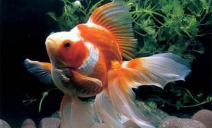Где отлавливаются рыбки для наших аквариумов?