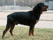 Догхантеры отравили собак на территории МГУ