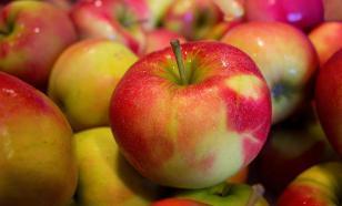 Яблоки защитят организм от рака и болезней сердца