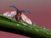 Предсказывать погоду будут по насекомым
