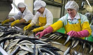 Криль и миктофиды могут поддержать рыболовство России
