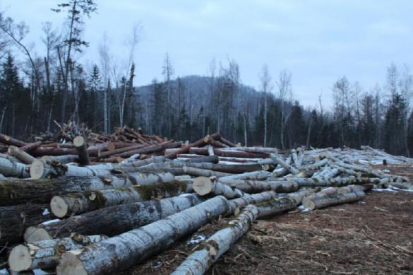 В Еврейской АО остановили незаконную вырубку леса