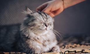 Кот обнаружил у хозяйки рак раньше врачей